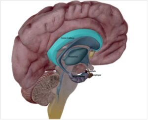 systeme limbique